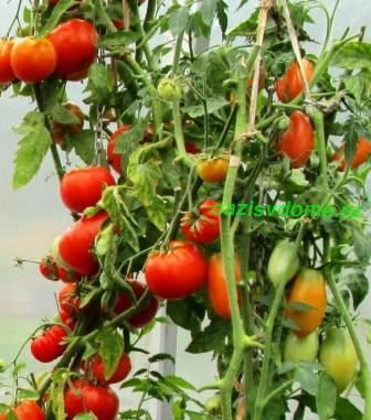 Когда сажать помидоры на рассаду: разнообразие самых урожайных сортов, подсказки лунного календаря 2020 года, правильная подготовка семян к посеву на рассаду и в грунт