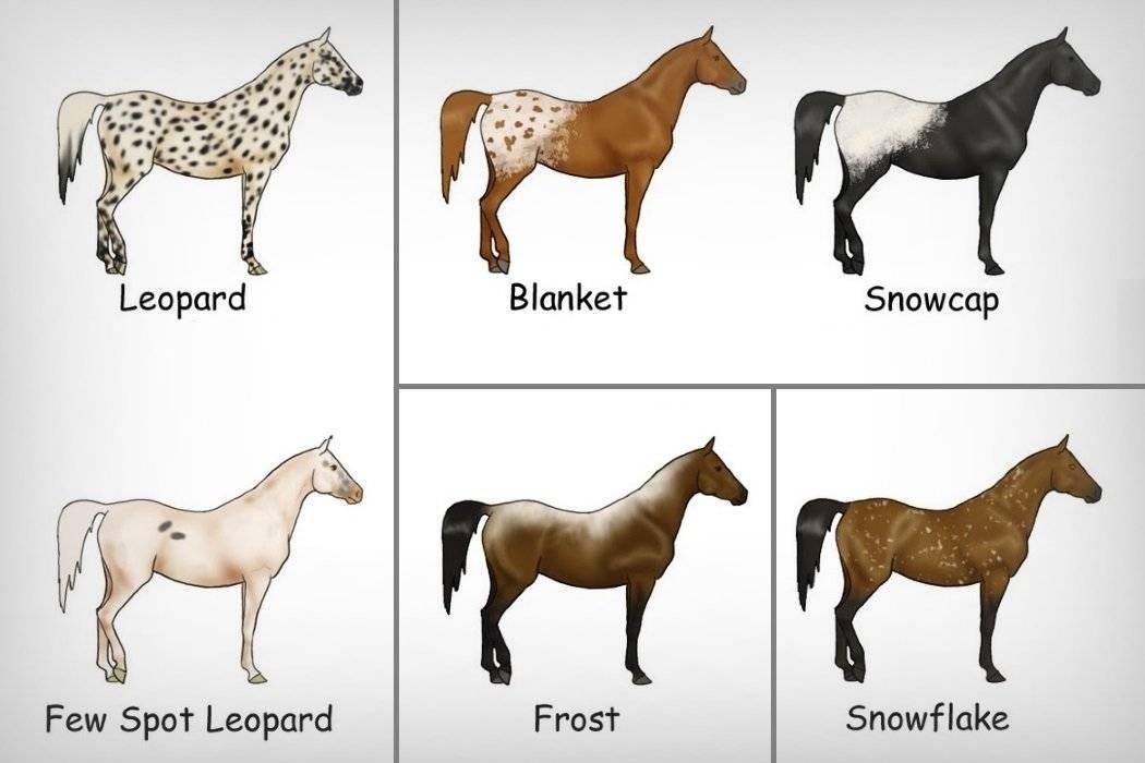 Лошадь чалой масти