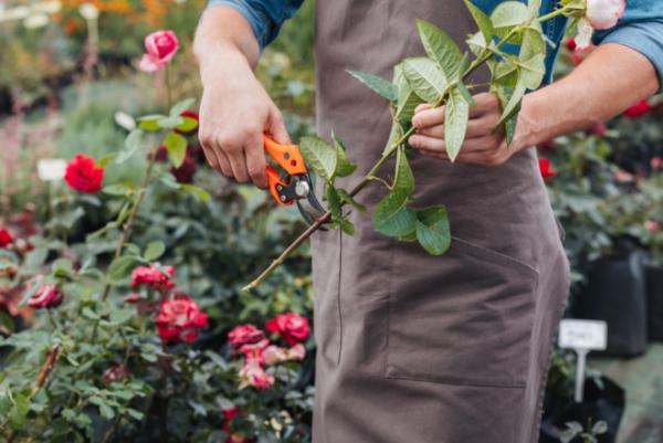 Как и чем правильно укрывать розы осенью: какие розы не надо укрывать на зиму, а какие – необходимо