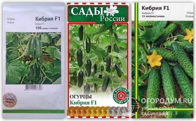 Сорт огурцов кибрия f1: описание и характеристика, отзывы