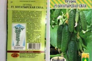 Описание огурцов сорта богатырская сила, их характеристика и выращивание