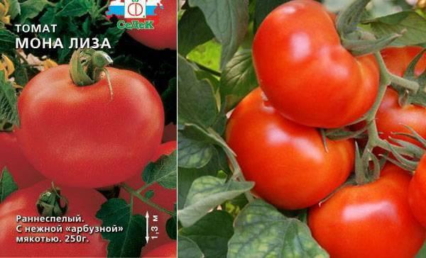 Описание, характеристика и выращивание томата сорта челнок