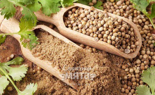 Кориандр: посадка и уход в открытом грунте, свойства и применение