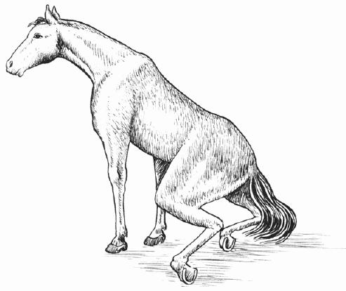 Температура тела лошади: норма, особенности и способы измерения