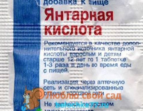 Применение янтарной кислоты для томатов