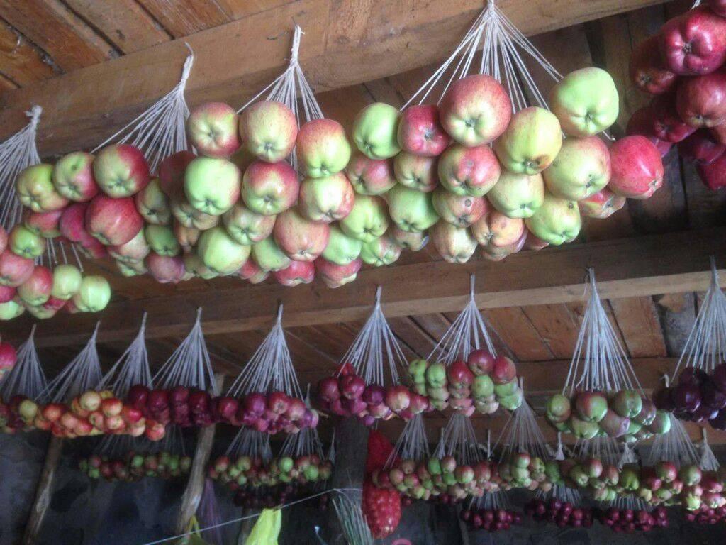 Как правильно сохранить яблоки на зиму в домашних условиях свежими