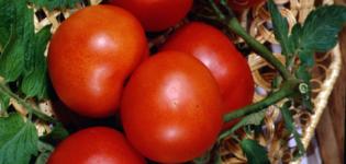 Гибрид паленка – урожайный томат для закрытого грунта: описание, преимущества, особенности выращивания