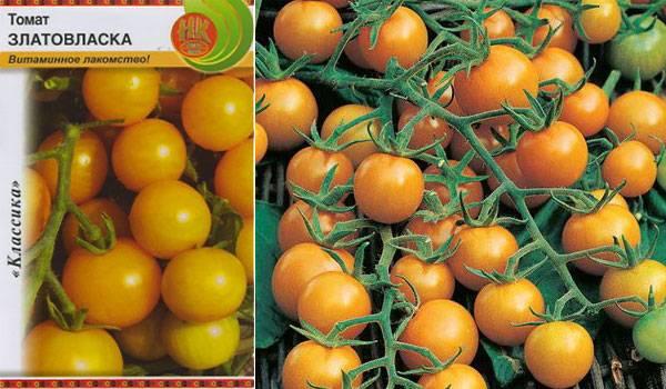 Описание сорта томата козырь, особенности выращивания и ухода