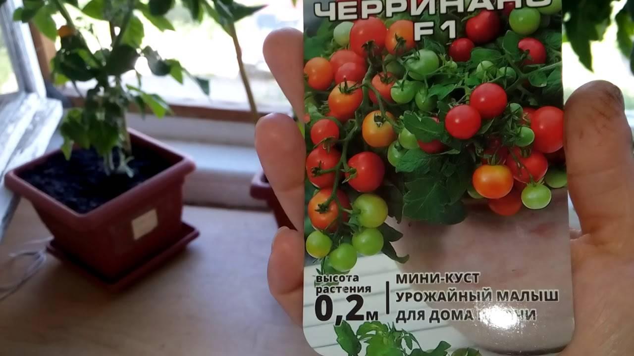 Томат тамина: характеристика и описание сорта, особенности выращивания с фото