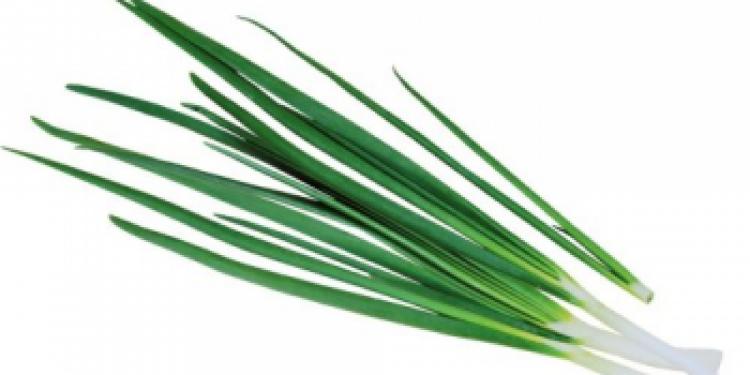 Вредители лука: описание и борьба в открытом грунте