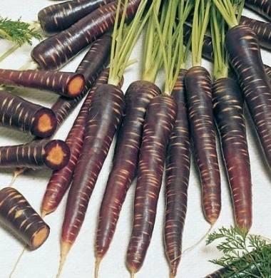 Малоизвестная и невероятно полезная черная морковь: состав, лучшие сорта и особенности выращивания