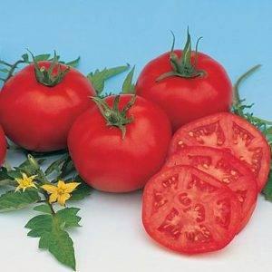 Томат москвич: 7 особенностей и 12 советов по выращиванию и уходу