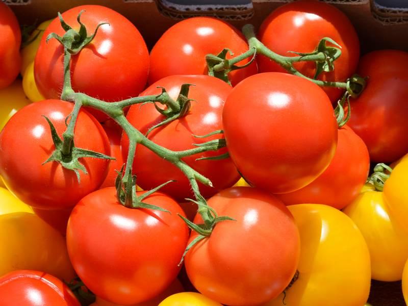 Стойкие томатные солдатики: штамбовые сорта помидоров