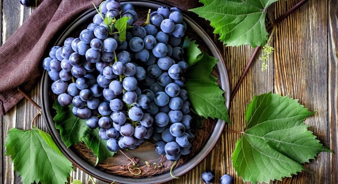 Как правильно укрыть виноград на зиму: советы для новичков