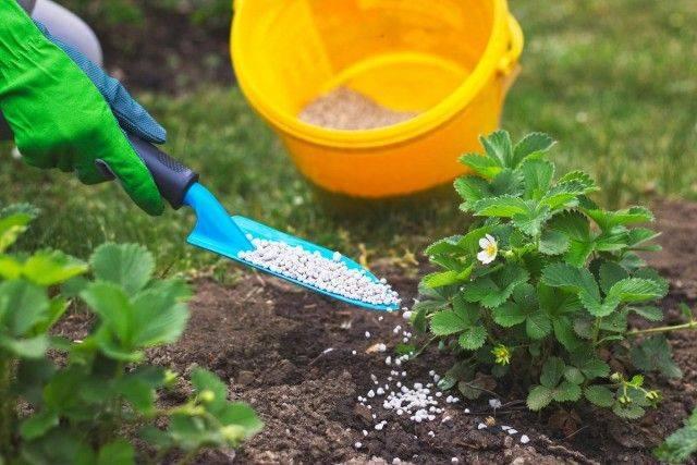 Калиевая селитра: советы, как правильно ее применять в саду и огороде