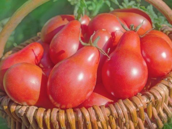 Характеристика и описание сортов китайских помидоров