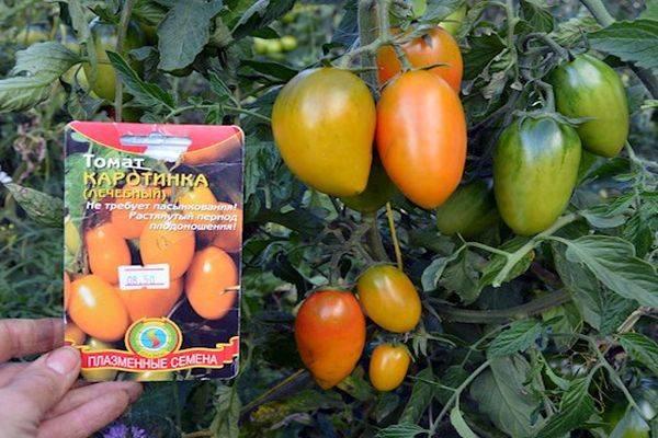 Описание сорта томата Каротинка, его выращивание и уход