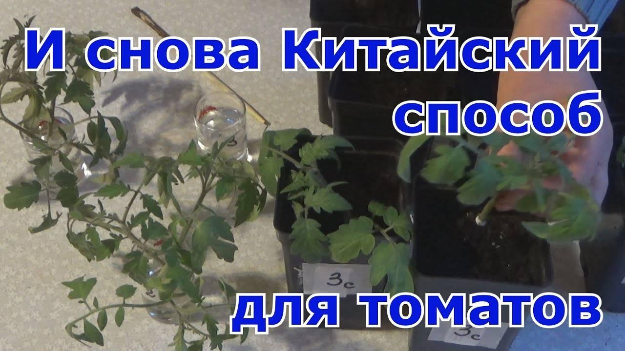 Посадка помидор по китайскому методу: преимущества и технология выращивания
