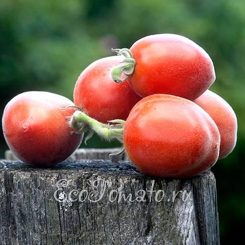 Описание томата персик от компании «гавриш»