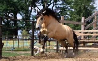 Масть лошади мухортая