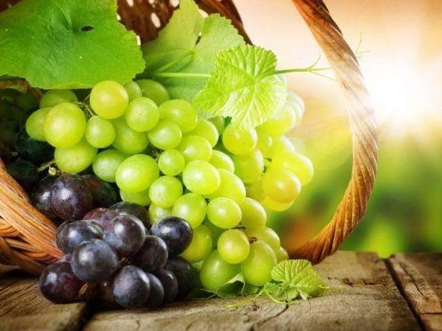 Пересадка винограда весной