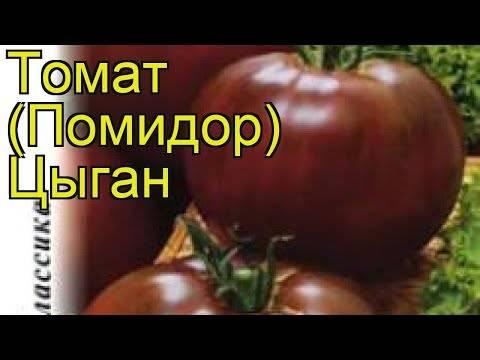 Идеально подходящий для прохладного климата, но при этом дающий богатый урожай томат «марфа f1»