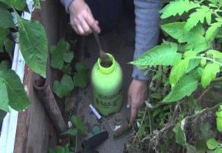 Что делать, если кто-то ест рассаду огурцов в теплице, как защитить