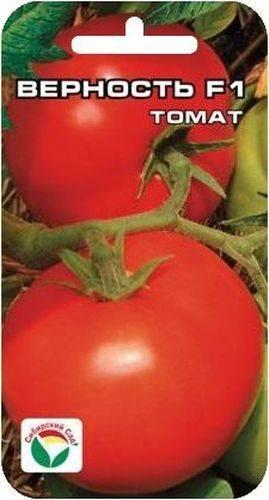 Выращивание томата верочка