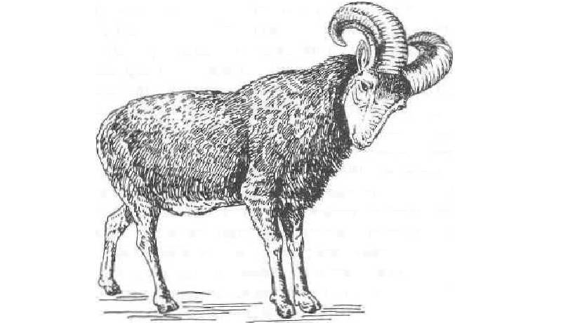 Как человек приручал и одомашнивал животных