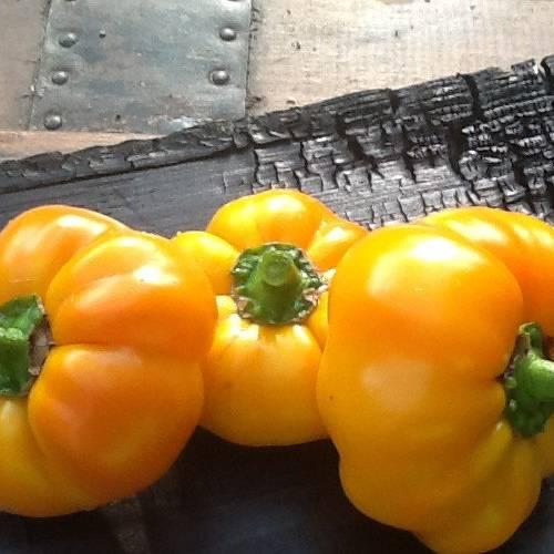 Описание высокоурожайных сортов перца (виктория, ласточка, гогошары, колобок)