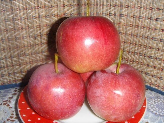 Описание сорта яблонь Супер Прекос, выращивание и урожайность