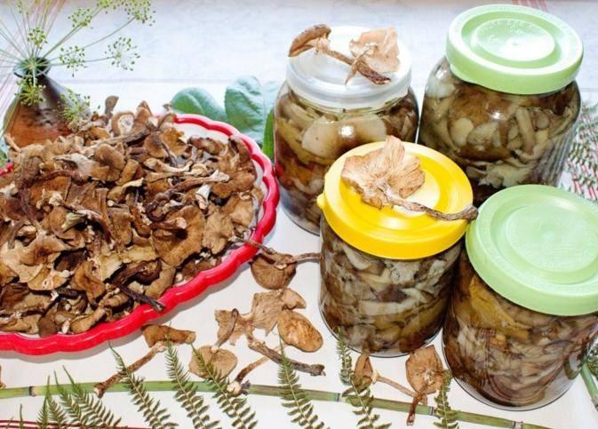 Маринованные опята на зиму – 6 вкусных пошаговых рецепта!