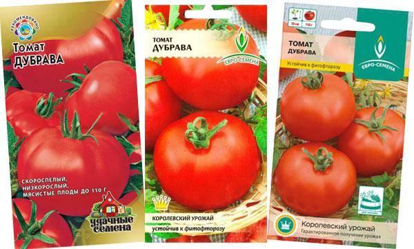 Характеристика и описание сорта томата Дубрава, его урожайность