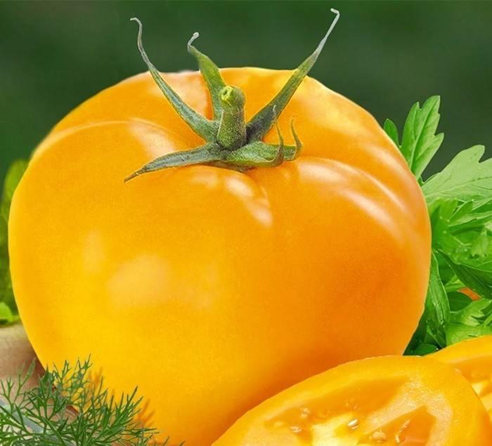 Красивый и вкусный томат «русский богатырь»: описание сорта, особенности выращивания, применение помидоров