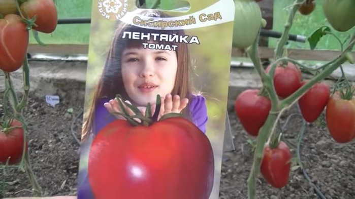 Кисло-сладкий, раннеспелый сорт томата «русский вкусный»: достоинства и недостатки помидора