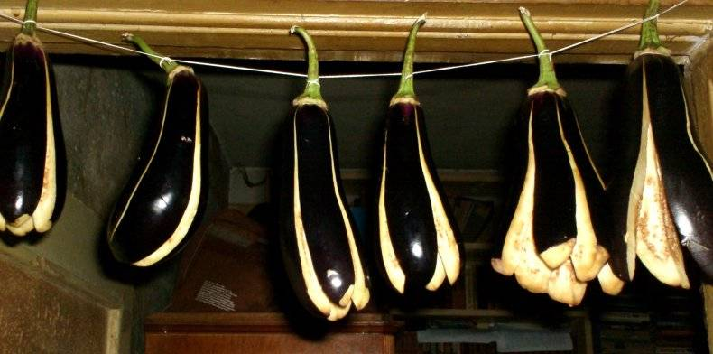 Особенности заготовки баклажан на зиму: как правильно заморозить овощ в домашних условиях