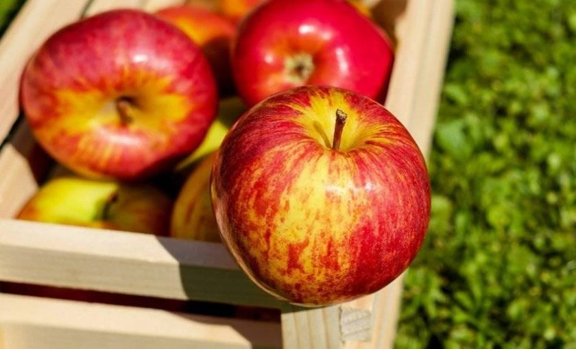 Описание сорта яблонь сеянец титовки, история селекции и оценка плодов