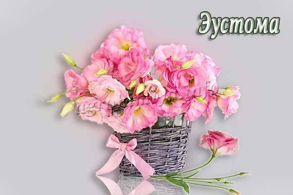 Эустома: требовательная французская роза обязательно отблагодарит за уход нежными цветками