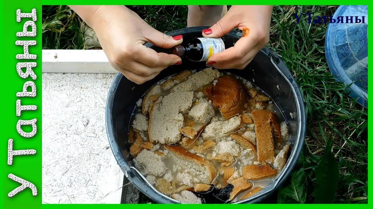 Как правильно подкармливать огурцы в открытом грунте?