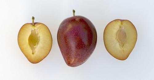 Описание гибрида сливы и вишни омская ночка, история и особенности выращивания