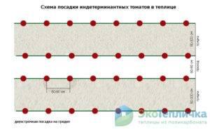 Особенности посадки помидоров в теплицах из поликарбоната