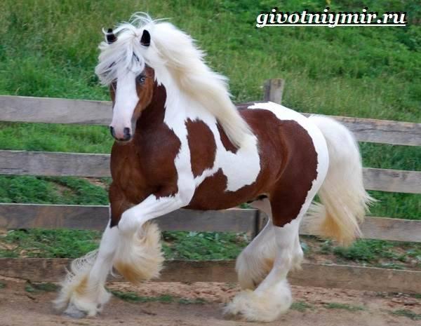 Описание лошадей тракененской породы, правила содержания и стоимость