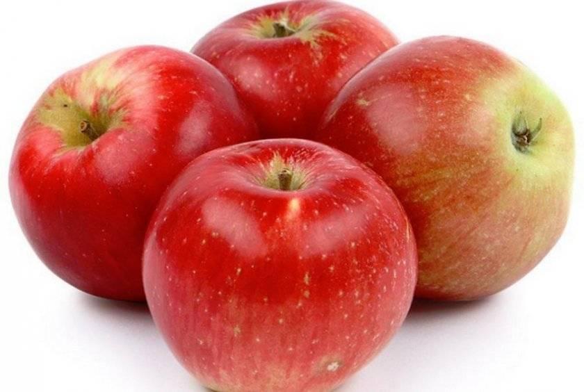 Для каких регионов выведен сорт яблонь Аленушкино, описание и характеристики