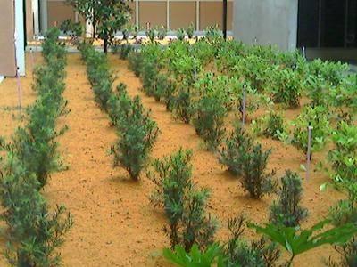 Мульчирование огурцов: выбор материала, технология выращивания