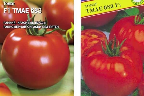Описание сорта томата Тмае 683 f1 новинки из Японии