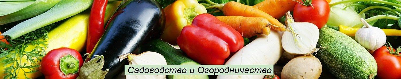Почему кучерявится морковь и что делать, народные средства и методы