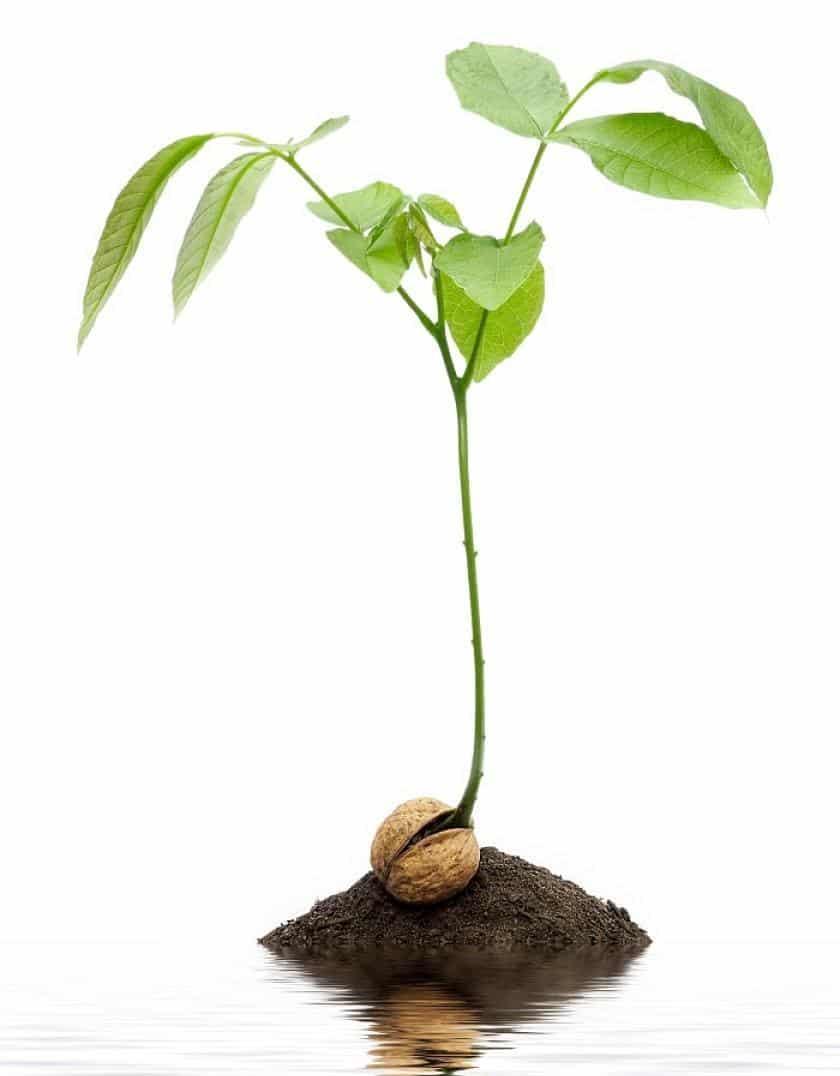 Какие растения можно посадить под плодовыми деревьями?