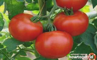 Вкусный томат с нестандартной внешностью «пузата хата»: описание сорта и особенности выращивания