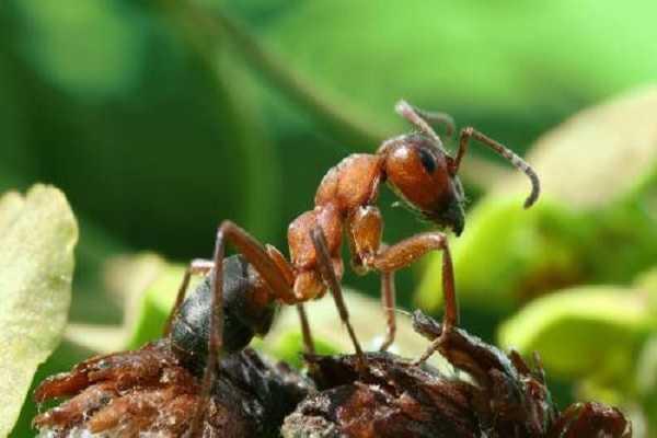 Что делать с муравьями в теплице с огурцами – 13 действенных методов борьбы