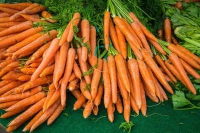 Морковь диана — описание сорта, фото, отзывы, посадка и уход